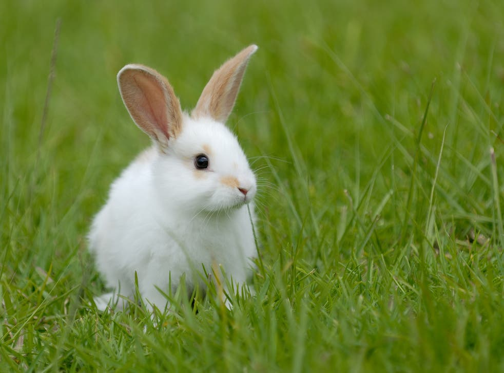 What Color Are Rabbits Eyes? Are They All The Same?