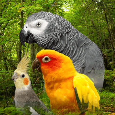 Top 10 Most Expensive Pet Birds you can have in your home