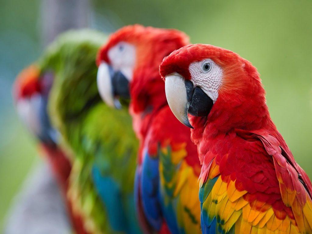 10 Most colorful Parrots species