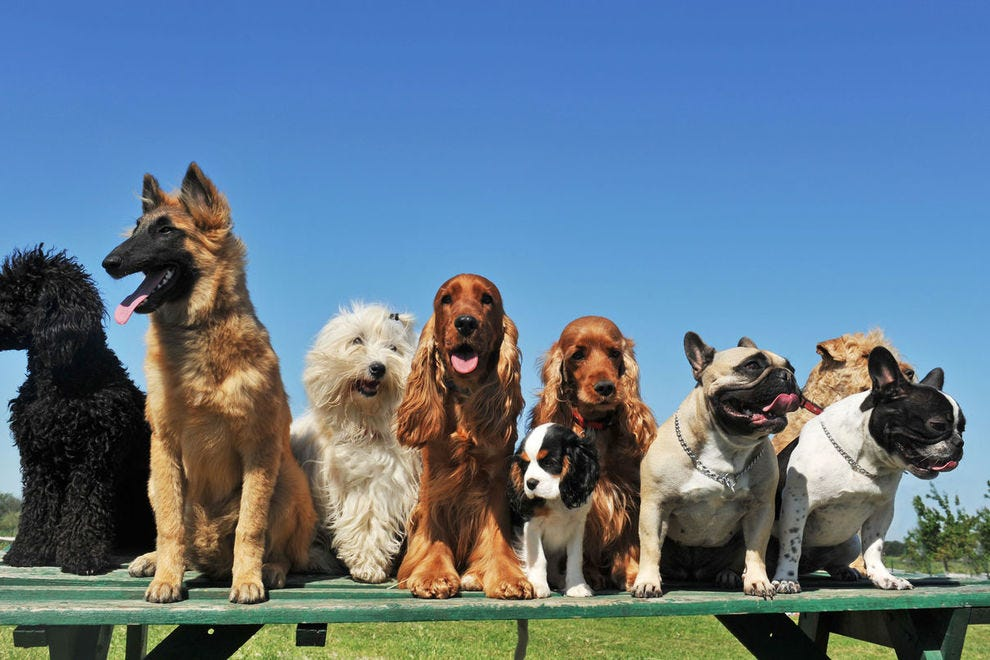 Top 10 Most Popular Dogs breeds in America