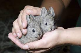 10 Smallest Rabbits in the World