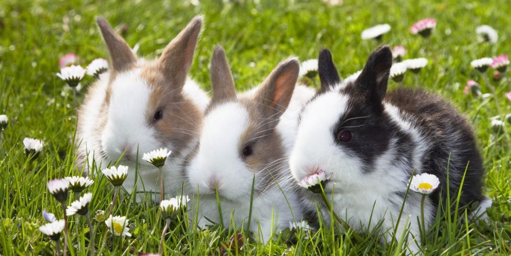 Top 15 Cutest Bunny (Rabbits) Breeds In The World
